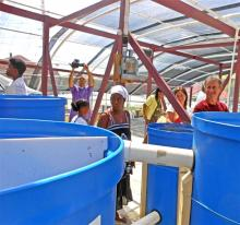 Workshop participants cluster around the tilapia tanks.