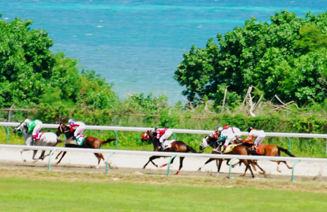 Horse race down the picturesque back stretch at Randall 'Doc' James Racetrack.