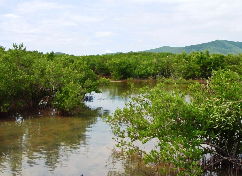 Great Pond, Hope's winter range on St. Croix, is a mangrove wetland and a designated Important Bird Area (Photo courtesy of CCB).