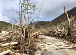 Debris lines St JOhn's NOrth Shore Road. Because it is in the V.I. National Park, it is not included in the total for the island.