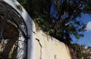 Mango tree roots crack through a retaining wall. (David MacVean photo)