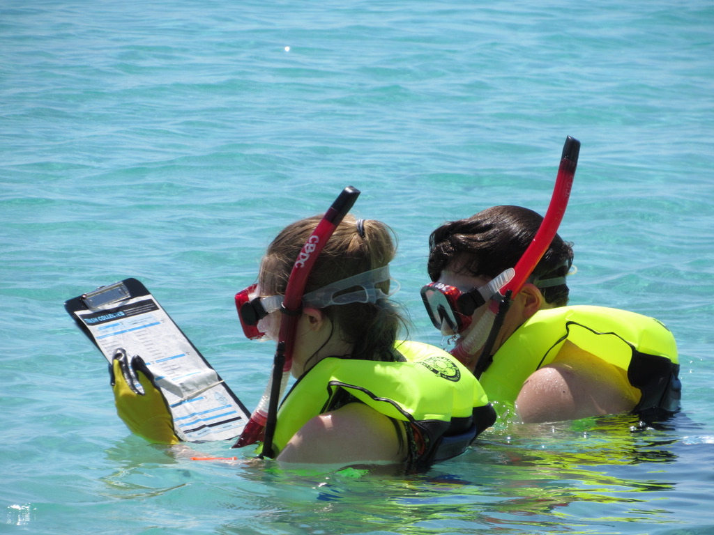 Two visiting volunteers snorkel in Brewers Bay and log the types of debris they find. (Photo provided by VI-EPSCoR)