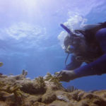 CMES diver Colin Howe outplants coral. (UVI photo)