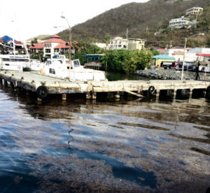 Sargassum floats near the Red Hook ferry dock. (Kelsey Nowakowski photo)