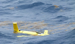 An Ocean Glider encounters Sargassum in local waters.