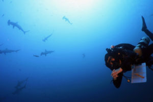 Brandtneris dives to 170 feet near Wolf Island in the Galapagos while hammerhead sharks swim above. (Photo by Tyler B. Smith)