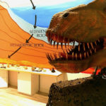 The iconic Jasper the T-Rex will be there for hte grand re-opening of the V.I. Children's Museum. (Photo provided by V.I. Children's Museum)
