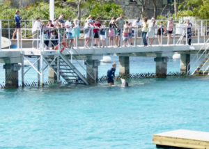 Liko and his caretaker give dolphin lessons to park visitors (sap photo)