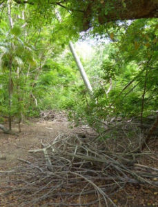 Debris and precariously leaning trees need to be addressed before the arboretum is considered safe. (sap photo)