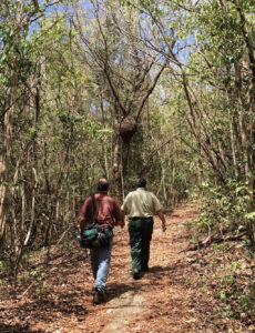 View of a trail inside the forest. (Photo by Grizelle González, USDA FS-IITF)