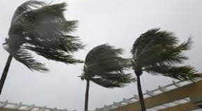 Palm trees during a hurricane on St Croix. Source file photo)