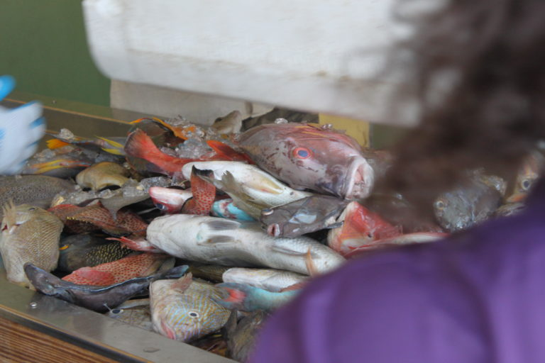 Funding Shortages and Bureaucracy All In a Day's Catch, Says Local Fisherman