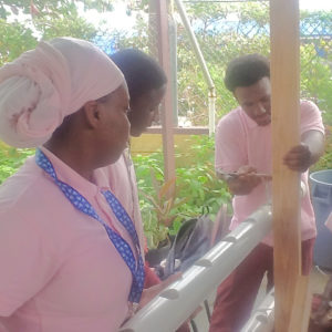 Agriculture students at Ivanna Eudora Kean High School construct a hydroponic crop system for their exam. Their instructor says the class gives an example of the wide world of agriculture beyond farming. (Photo submitted by Vincent Henley, Kean High)