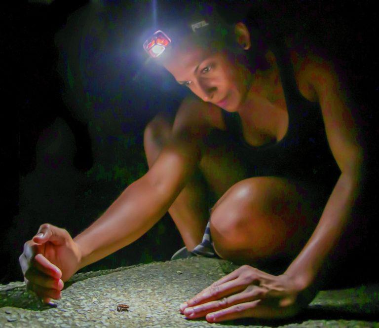 Tracking Endangered Mute Frogs on St. John