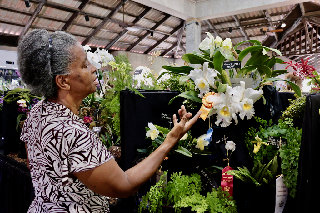 Pointing to lovely white Cattleya orchids, Rosemary Walcott talks about her experiences growing orchids on St. Croix since the 1980s. (Source photo by Linda Morland)