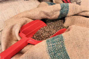 A burlap bag contains single-sourced, green coffee beans that are imported from Sumatra, an island off Indonesia. (Source file photo by Bethaney Lee)