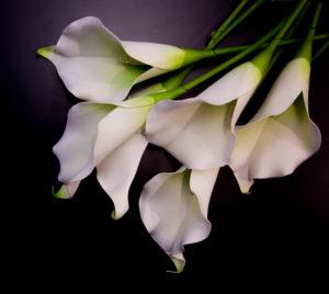 flower lilies funeral shutterstock