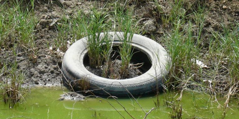 Legislators Attempt to Combat Tire Disposal Dilemma