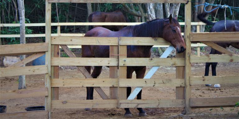 Horses Become the Victims in Casino Company Litigation