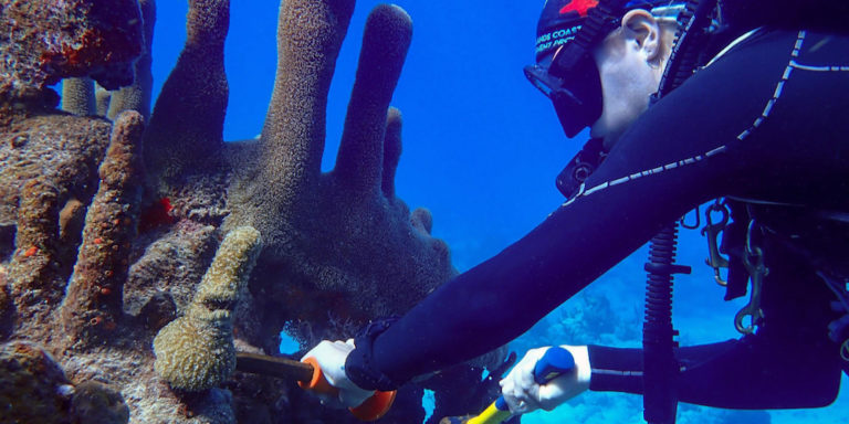 Coral Fragments Flown from St. Croix for Rescue on St. Thomas