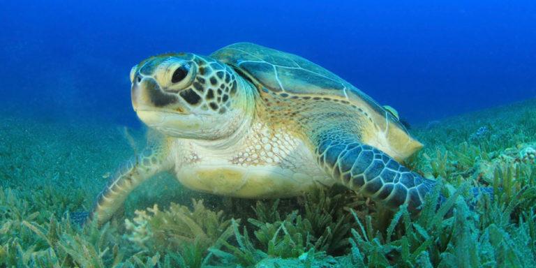 Endangered Species Day:  Conservation Efforts Helping Turtles