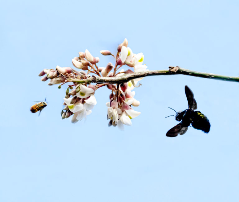Bees Searched for Flowers During the Dry Season